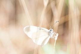 dragonfly-918571__180